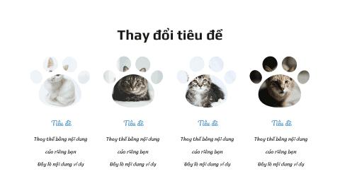 Mèo cưng 2